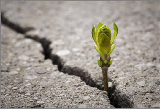 Ein ereignisreiches Grünes Jahr neigt sich dem Ende